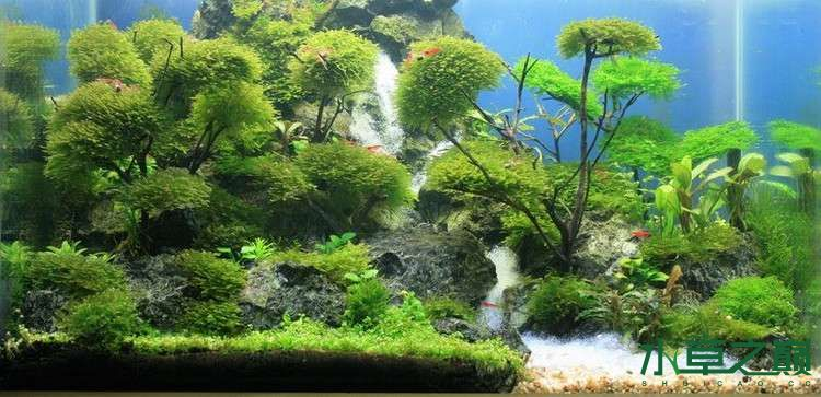 个人较为喜欢的几个莫丝水草造景 北京龙鱼论坛 北京龙鱼第5张