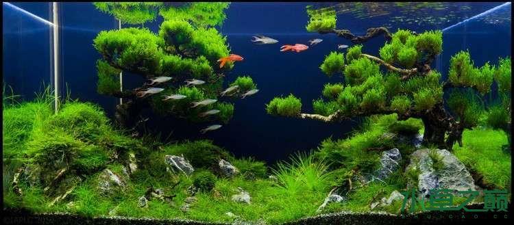 个人较为喜欢的几个莫丝水草造景 北京龙鱼论坛 北京龙鱼第4张