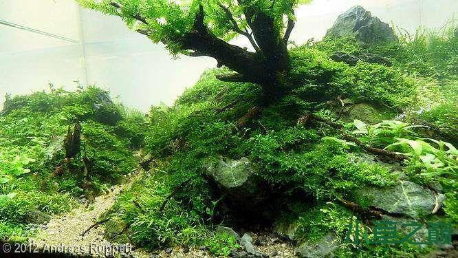 个人较为喜欢的几个莫丝水草造景 北京龙鱼论坛 北京龙鱼第6张