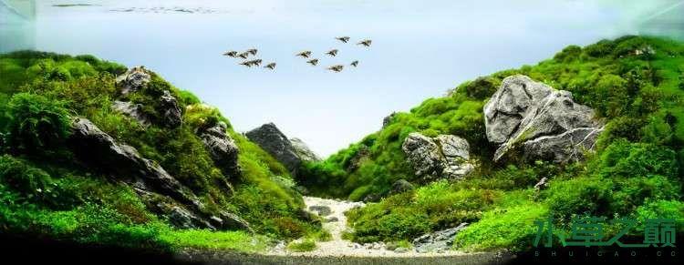 个人较为喜欢的几个莫丝水草造景 北京龙鱼论坛 北京龙鱼第8张