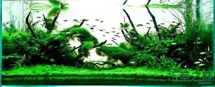 个人较为喜欢的几个莫丝水草造景 北京龙鱼论坛 北京龙鱼第9张