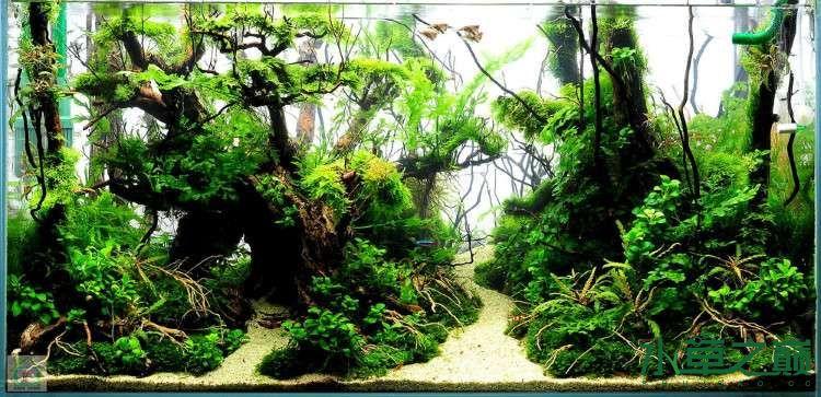 个人较为喜欢的几个莫丝水草造景 北京龙鱼论坛 北京龙鱼第10张