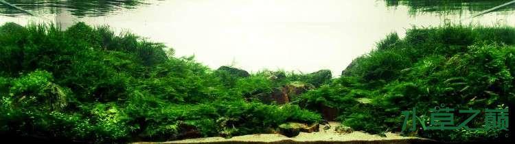个人较为喜欢的几个莫丝水草造景 北京龙鱼论坛 北京龙鱼第11张