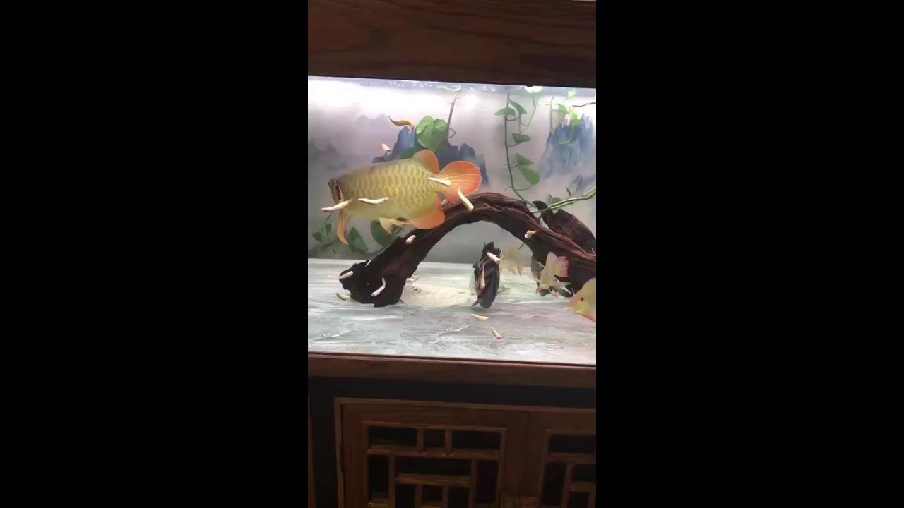 北京哪个水族店卖财神鹦鹉混杂了龙鱼