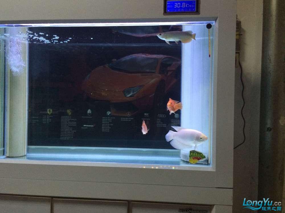 一米二的缸养这四只应该 不会多吧 给个见意 北京龙鱼论坛 北京龙鱼第1张
