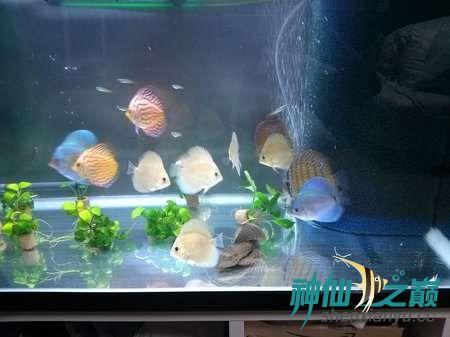这么漂亮的鱼你不得不服 北京观赏鱼 北京龙鱼第2张