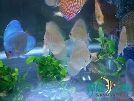 这么漂亮的鱼你不得不服 北京观赏鱼 北京龙鱼第3张
