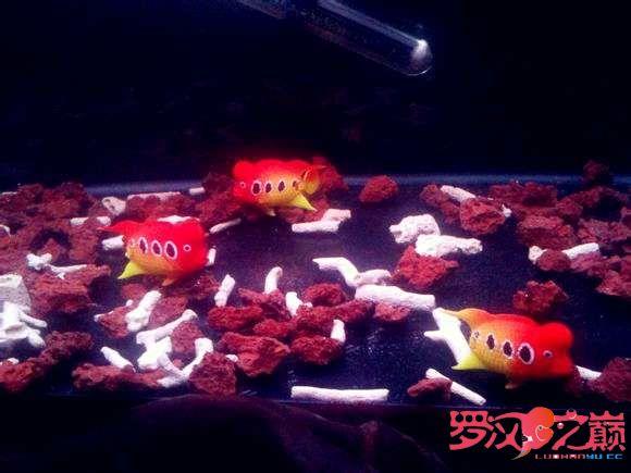 写点心得交流分享中篇 北京龙鱼论坛 北京龙鱼第10张