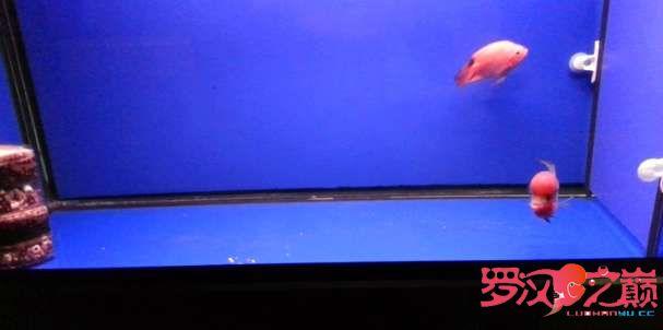 写点心得交流分享中篇 北京龙鱼论坛 北京龙鱼第12张