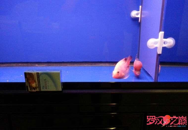 写点心得交流分享中篇 北京龙鱼论坛 北京龙鱼第13张