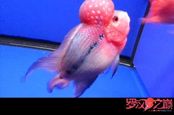 写点心得交流分享中篇 北京龙鱼论坛 北京龙鱼第16张