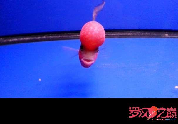 写点心得交流分享中篇 北京龙鱼论坛 北京龙鱼第19张