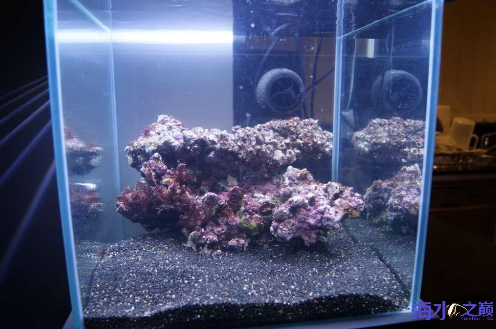 方缸要的就是折腾精神北京热带鱼批发市场在哪里 北京观赏鱼 北京龙鱼第2张