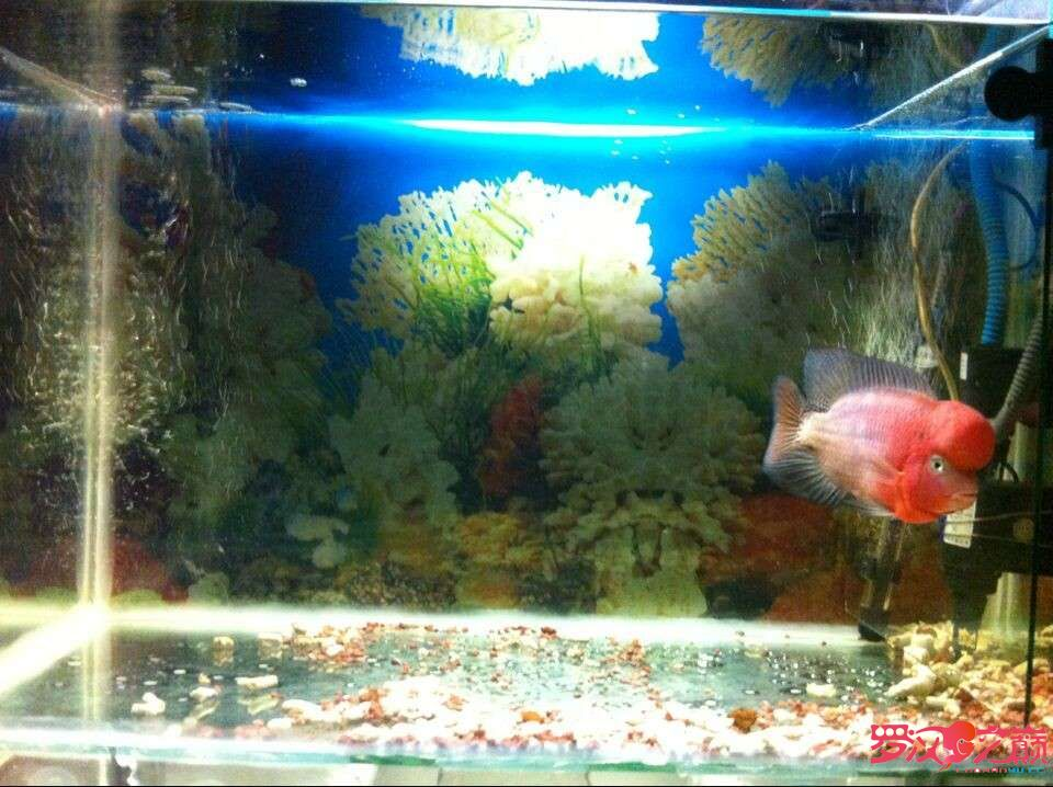 5个多月的成长 北京龙鱼论坛 北京龙鱼第2张