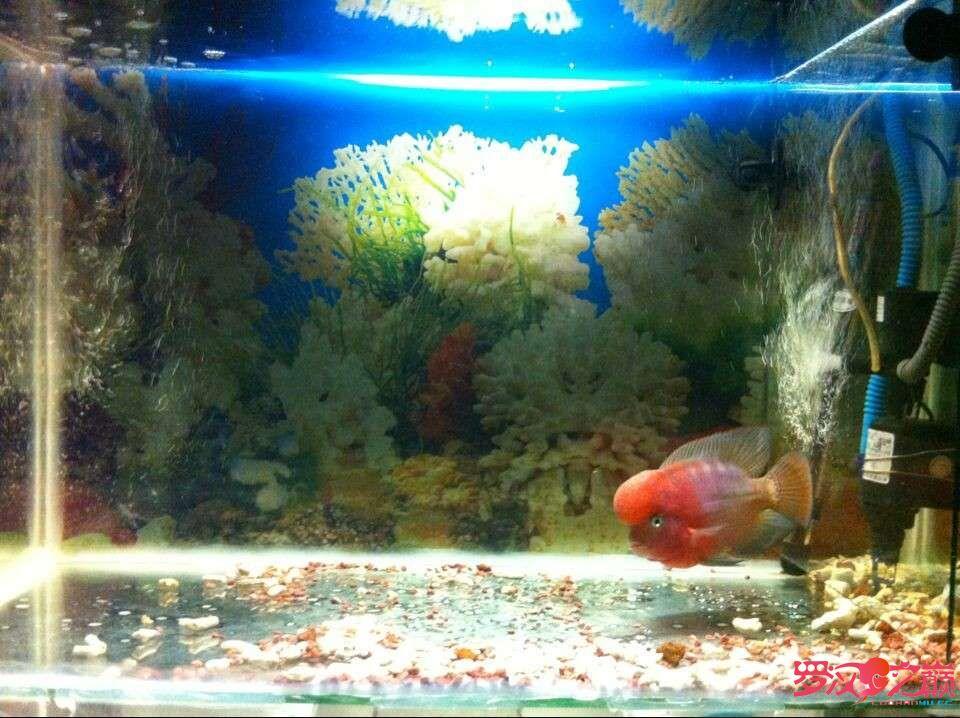 5个多月的成长 北京龙鱼论坛 北京龙鱼第6张