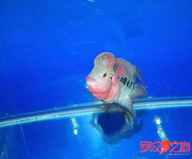 爱罗也过过五一 北京龙鱼论坛 北京龙鱼第2张