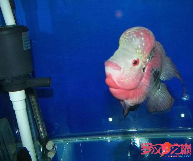 爱罗也过过五一 北京龙鱼论坛 北京龙鱼第3张