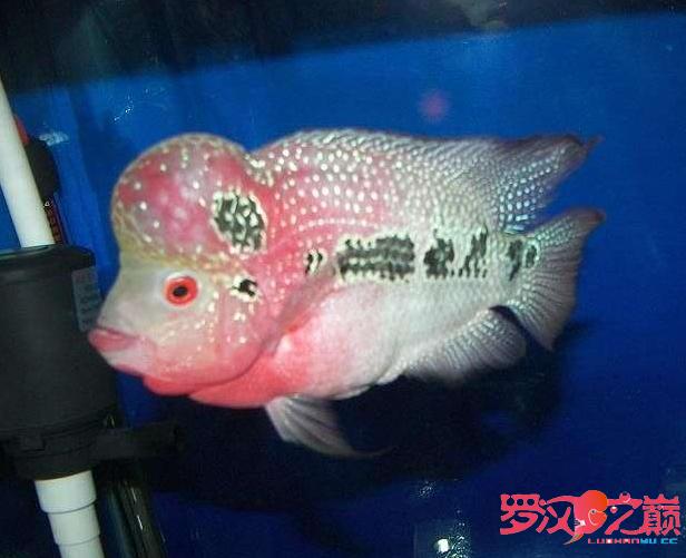 爱罗也过过五一 北京龙鱼论坛 北京龙鱼第6张