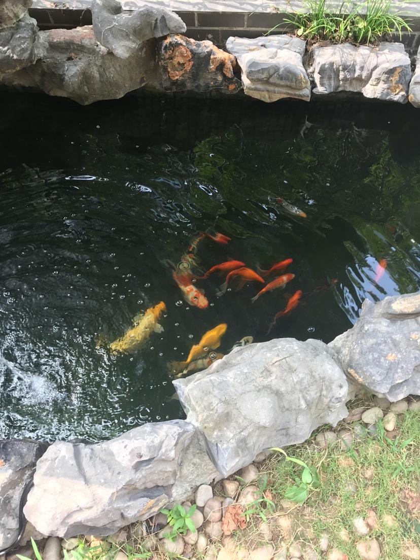 吸取鱼有经验每星期饿一天 北京龙鱼论坛 北京龙鱼第1张