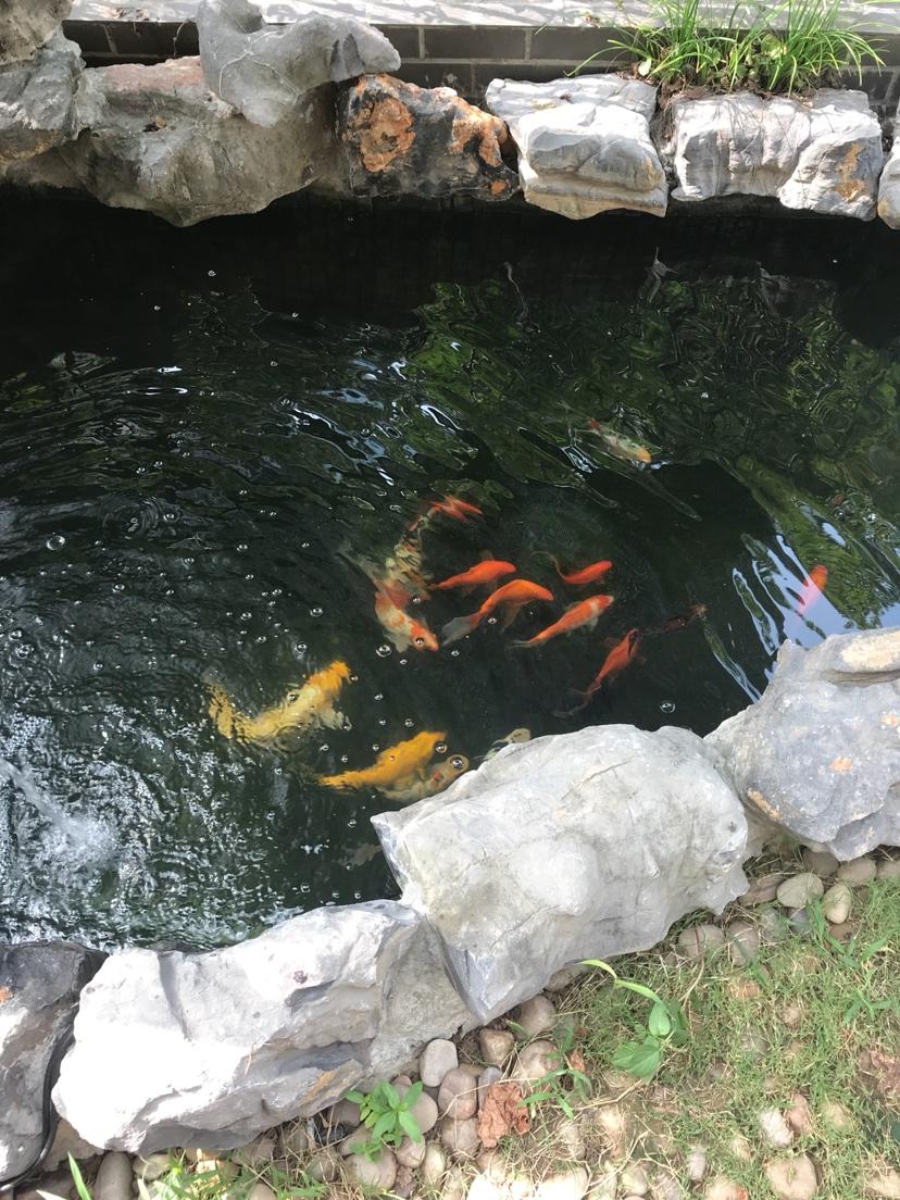 吸取鱼有经验每星期饿一天 北京龙鱼论坛 北京龙鱼第2张