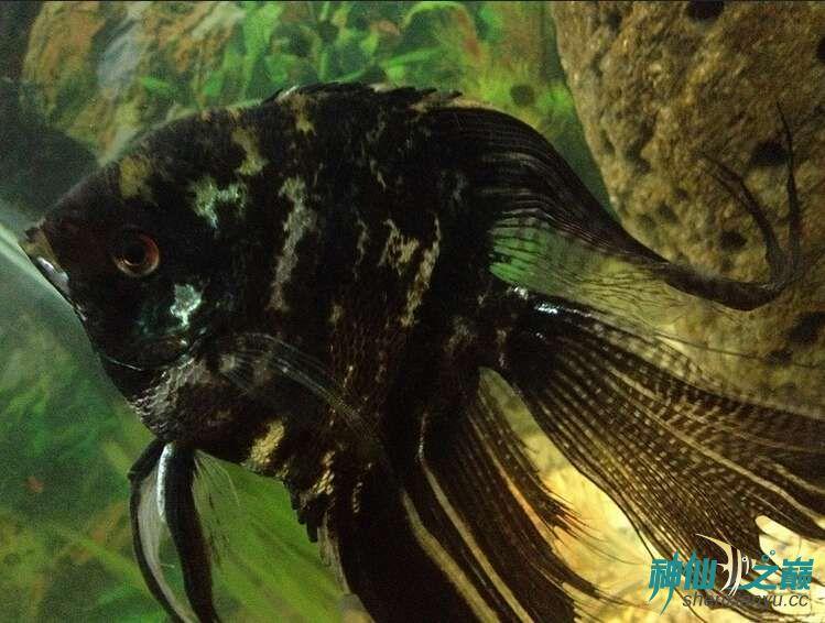 这是什么品种?有谁知道吗? 北京观赏鱼 北京龙鱼第1张