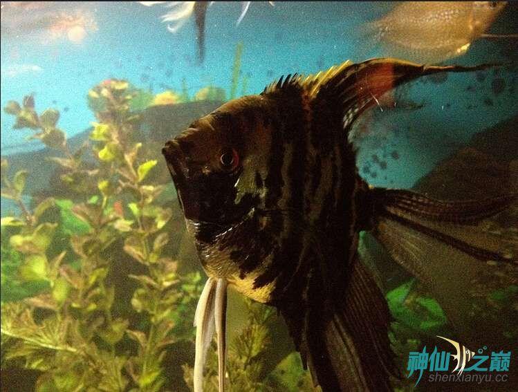 这是什么品种?有谁知道吗? 北京观赏鱼 北京龙鱼第2张