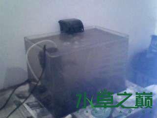 屌丝开缸穷啊什么都是拣来的 北京龙鱼论坛 北京龙鱼第2张