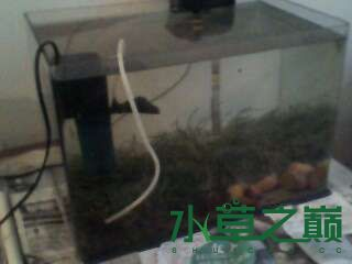 屌丝开缸穷啊什么都是拣来的 北京龙鱼论坛 北京龙鱼第4张