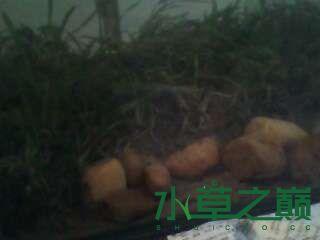 屌丝开缸穷啊什么都是拣来的 北京龙鱼论坛 北京龙鱼第5张