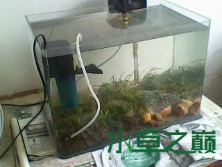 屌丝开缸穷啊什么都是拣来的 北京龙鱼论坛 北京龙鱼第6张