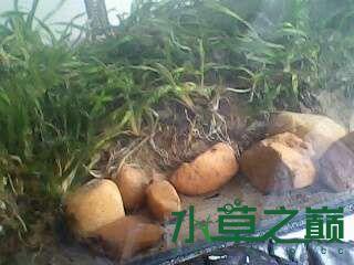 屌丝开缸穷啊什么都是拣来的 北京龙鱼论坛 北京龙鱼第7张
