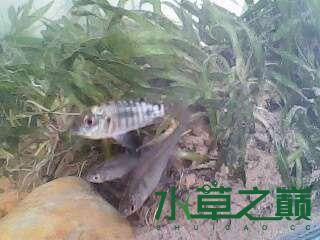 屌丝开缸穷啊什么都是拣来的 北京龙鱼论坛 北京龙鱼第8张
