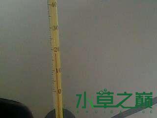 屌丝开缸穷啊什么都是拣来的 北京龙鱼论坛 北京龙鱼第10张