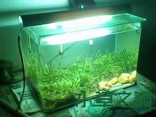 屌丝开缸穷啊什么都是拣来的 北京龙鱼论坛 北京龙鱼第13张