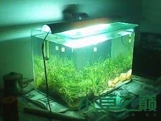 屌丝开缸穷啊什么都是拣来的 北京龙鱼论坛 北京龙鱼第14张