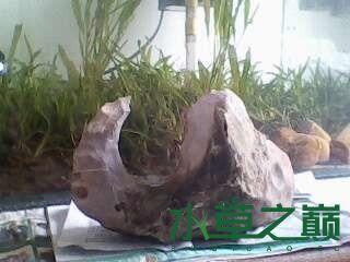 屌丝开缸穷啊什么都是拣来的 北京龙鱼论坛 北京龙鱼第16张
