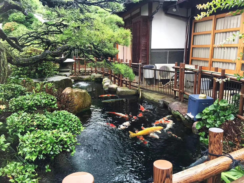六月我们用半个月走访了日本的锦鲤园 北京龙鱼论坛 北京龙鱼第3张