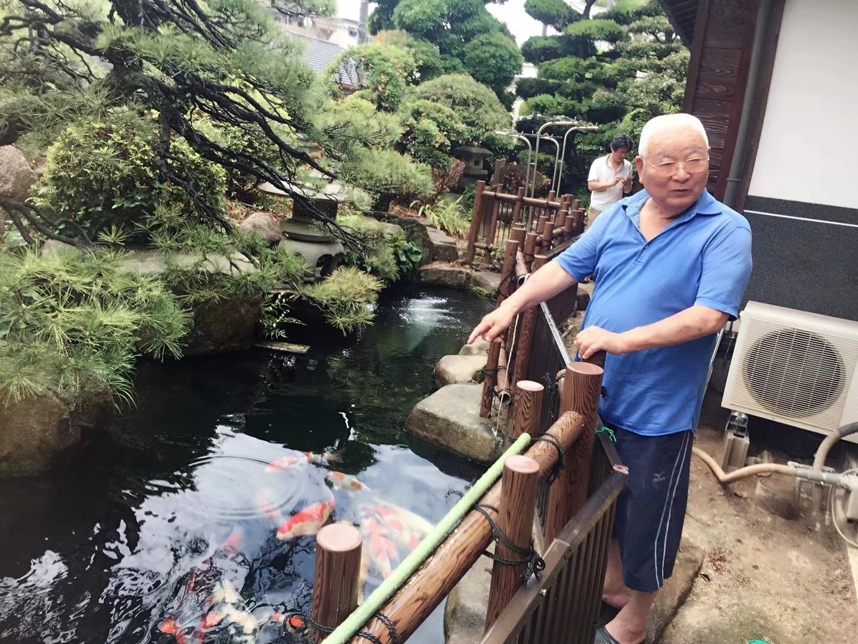 六月我们用半个月走访了日本的锦鲤园 北京龙鱼论坛 北京龙鱼第6张