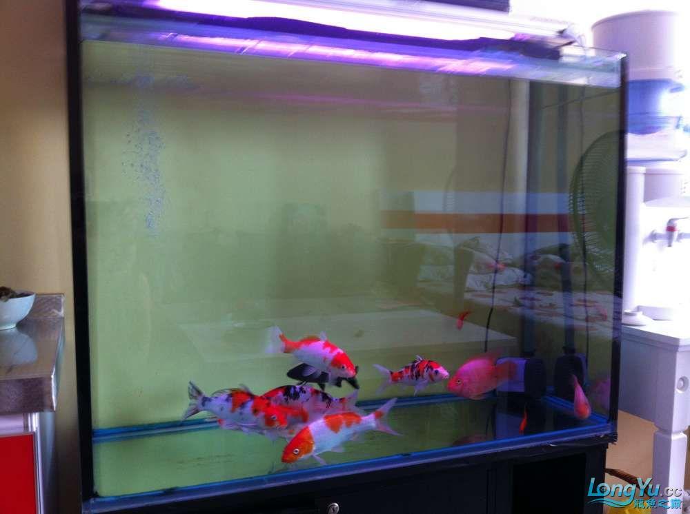 我的一米乘45高70的缸养什么适合 北京龙鱼论坛 北京龙鱼第2张