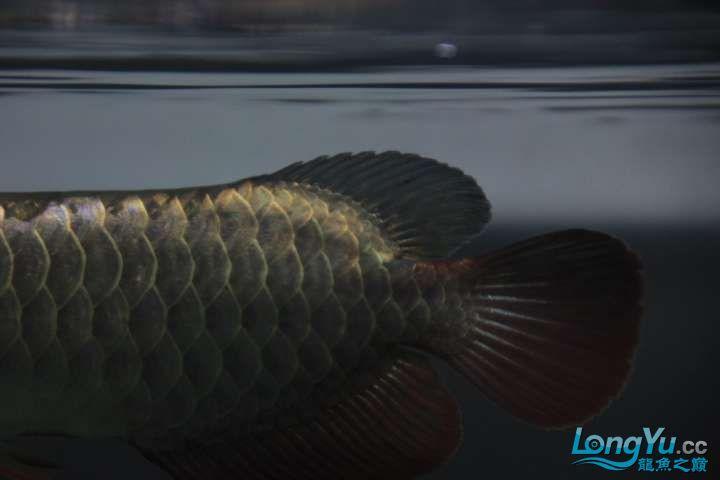 感谢各位渔友 北京龙鱼论坛 北京龙鱼第2张