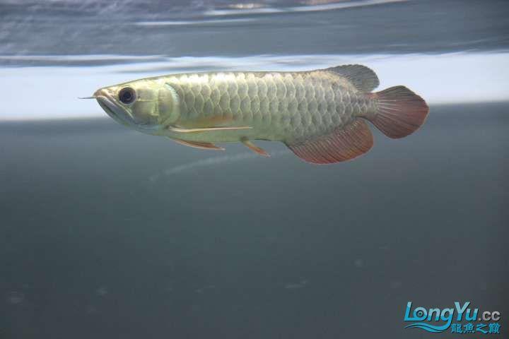 感谢各位渔友 北京龙鱼论坛 北京龙鱼第4张