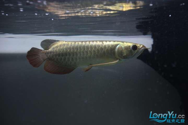 感谢各位渔友 北京龙鱼论坛 北京龙鱼第6张