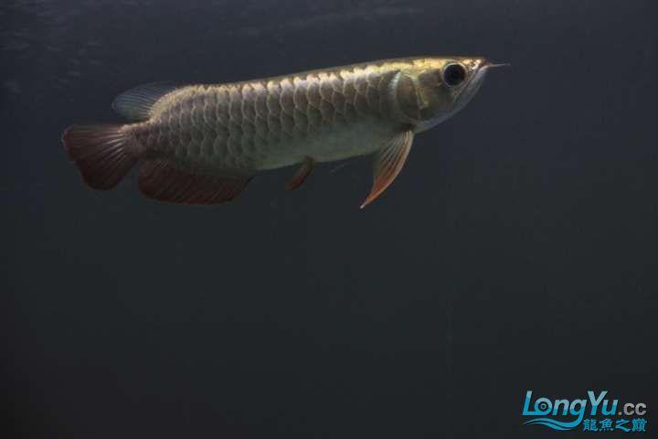 感谢各位渔友 北京龙鱼论坛 北京龙鱼第9张