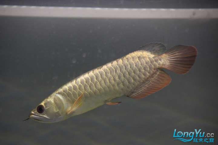 感谢各位渔友 北京龙鱼论坛 北京龙鱼第12张
