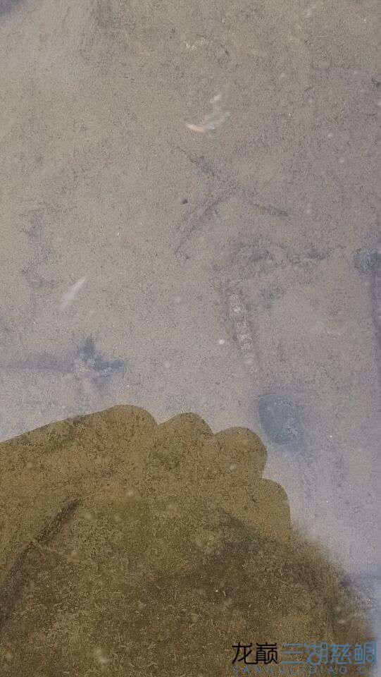 野采那些事儿 北京观赏鱼 北京龙鱼第7张