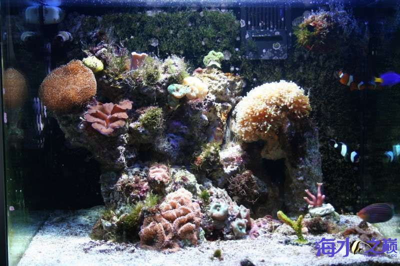 虽然缸不大但还是有好东西的 北京观赏鱼 北京龙鱼第1张