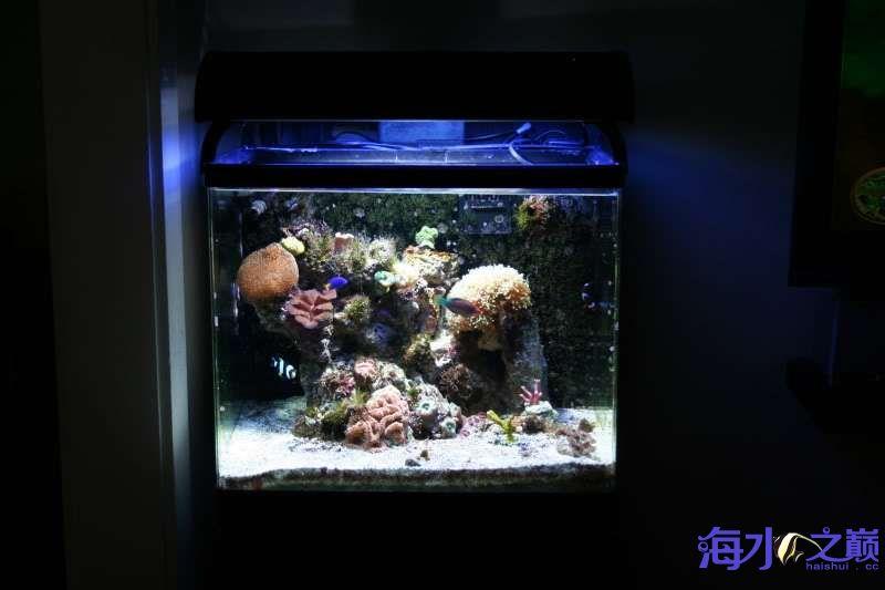 虽然缸不大但还是有好东西的 北京观赏鱼 北京龙鱼第6张