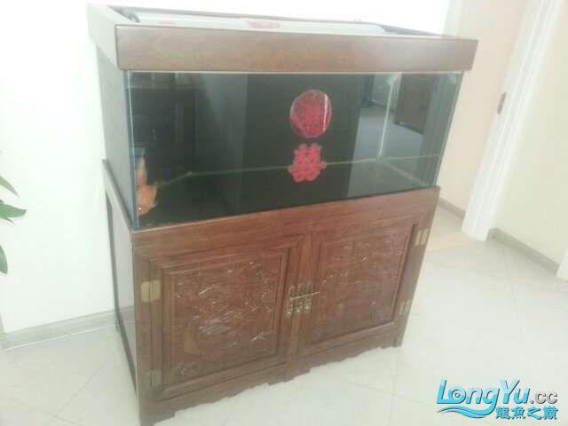 河北承德 帮朋友做的鱼缸 1206070 北京龙鱼论坛 北京龙鱼第2张