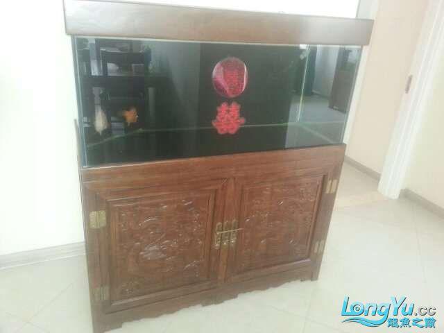 河北承德 帮朋友做的鱼缸 1206070 北京龙鱼论坛 北京龙鱼第3张