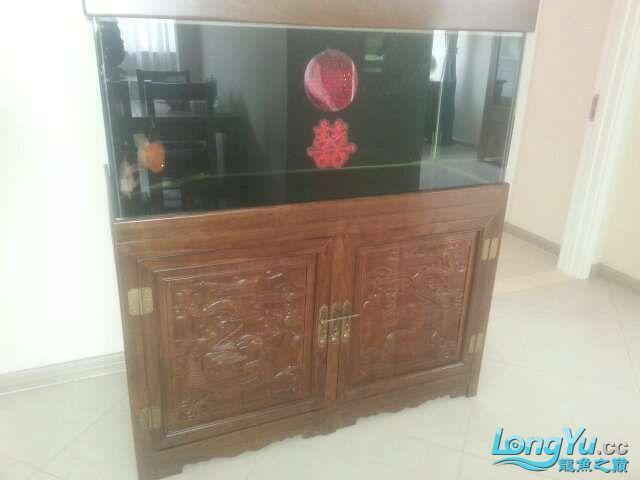 河北承德 帮朋友做的鱼缸 1206070 北京龙鱼论坛 北京龙鱼第7张